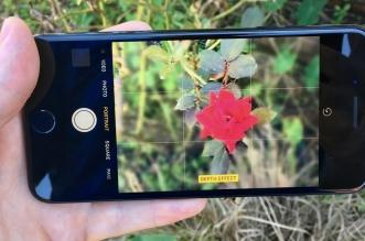 iphone 7plus portrait
