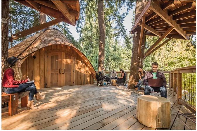 Microsoft built tree houses