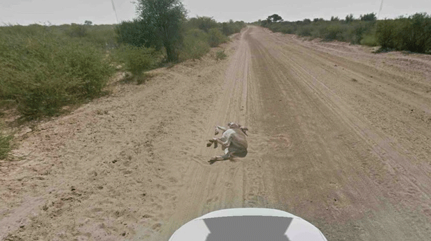 donkey-in-the-road-google-maps