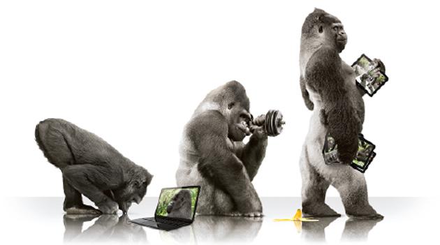 gorilla-lead